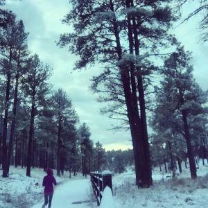 snowytrails